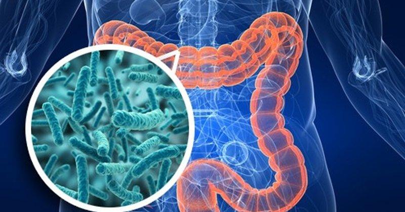 Микробиота кишечника и рефлексология, какая связь?