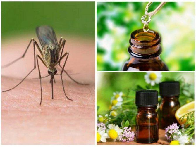 Растения и эфирные масла для отпугивания комаров